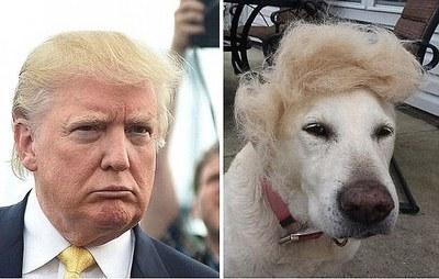 ستاره شناسان چینی: سالی سگی در انتظار ترامپ