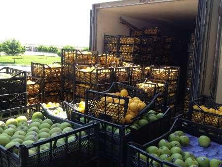 بیش از یک تن میوه خارجی قاچاق در قشم کشف شد