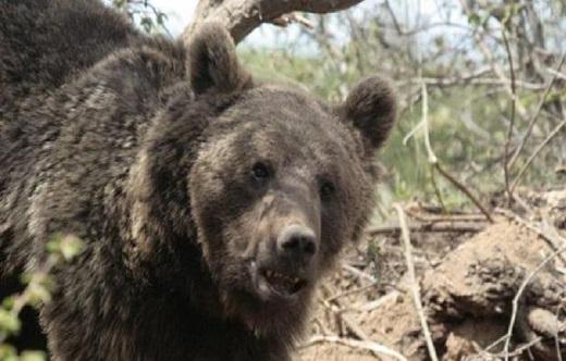 درگیری وحشتناک جوان مشگین شهری با خرس