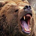 حمله وحشتناک خرس وحشی به تماشاچیان سیرک