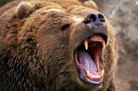 خرس مرده خور
