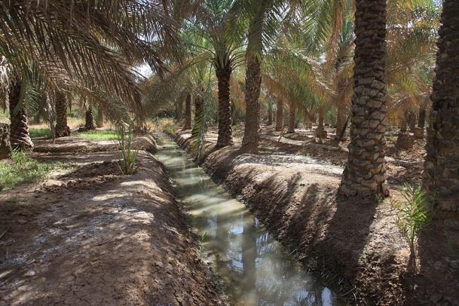 تامین آب مورد نیاز برای آبیاری نخیلات آبادان