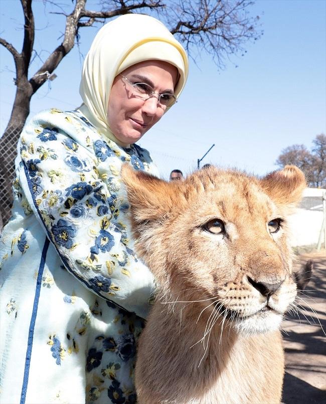 همسر اردوغان با دم شیر بازی کرد