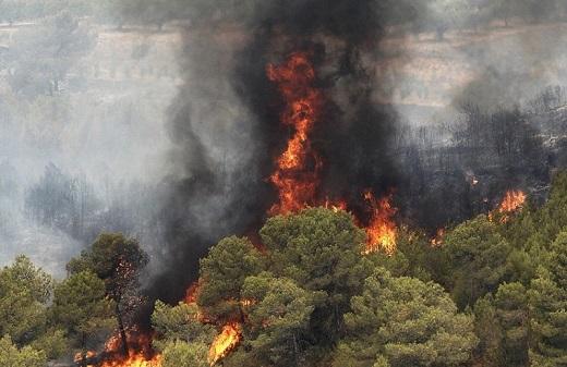 عاملان آتش سوزی در پارک ملی گلستان