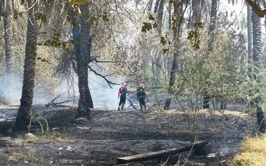 آتش سوزی در باغات میناب