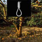 قتل اسرارآمیز یک جوان جویباری در باغ مرکبات