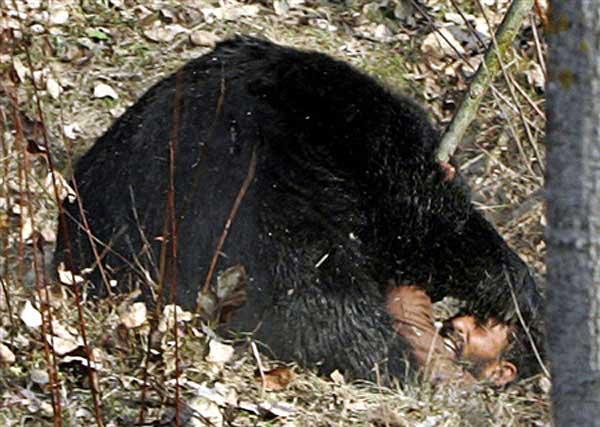حمله خرس