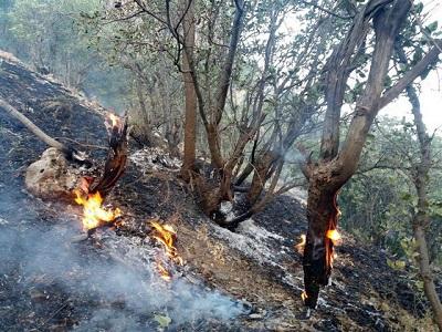 آتش سوزی جنگل های کلاله