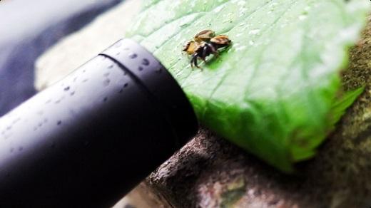 عکاسی از چشم حشرات با این لنز عجیب