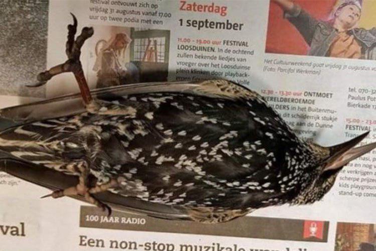 در یک فاجعهی زیست محیطی، آزمایش اینترنت پرسرعت 5G در هلند جان صدها پرنده را گرفت