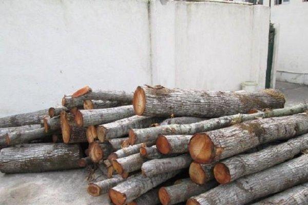 225 تن چوب قاچاق کشف شده است