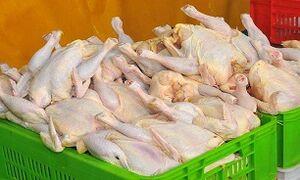 علت گران شدن مرغ